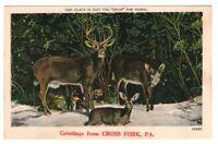 Undated Unused Postcard Greetings from Cross Fork Pennsylvania PA Family of Deer