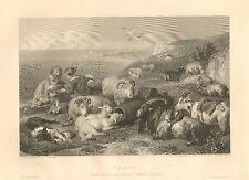 Sheep, Lambs, Goats, Shepherd, Collie Dog, by Landseer, Antique Art Print. Rare.