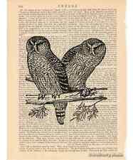 Owl Pair #3 Art Print on Antique Book Page Vintage Illustration Nocturnal Birds
