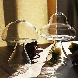 Mushroom Shaped Glass Vase Beautiful Transparent Hydroponic Plant Vase De T/