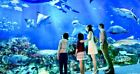 SEA Aquarium cheap ticket discount Sentosa Universal Studios Adventure cove Cabl
