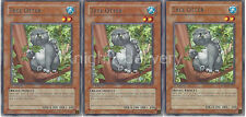 Yugioh Raccoon Budget Deck - Wind-Up Kitten - Ponpoko - Ronin Raccoon - 43 Cards