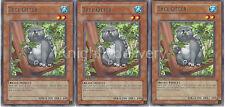 Yugioh Raccoon Budget Deck - Wind-Up Kitten - Ponpoko - Ronin Raccoon - 43 Cards