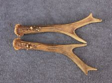 Set Of Roe Deer Antlers (Pair, Horns, Cabin, Knife, Carving, Hunting, Taxidermy)