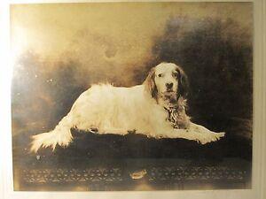 ANTIQUE FINE ART PHOTOGRAPHER IRA LAWRENCE HILL NY RETRIEVER GETTY SMITHSONIAN