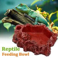 Reptile Food Feeding Natural Resin Bowl Amphibians Tortoise Lizard Water