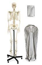"Human Skeleton Vision Scientific VAS201 Full Size 66"" w/Color Poster/Dust Cover"