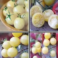 100 Samen Weiß Kirschtomate Ertragreich Freilandanbau Große Tomatensamen HO G5I3