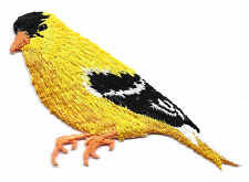 BIRDS - GOLDFINCH, YELLOW, BLACK & WHITE/Iron On  Embroidered Applique/Birds
