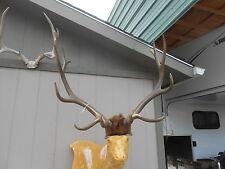 BIG 6x6 COLORADO ELK ANTLERS rack taxidermy deer mule whitetail sheds moose