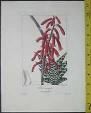 Bessa,P.Flore des Jardiniers,Aloe variegata,Engraving,c.1836