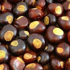New listing Buckeye nuts Ohio State Buckeyes 100 Nuts - crop, crafts, jewelry good luck
