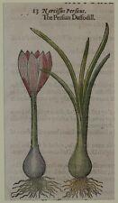 JOHN GERARD BOTANICA MATTHIOLI 1597 NARCISSUS PERSICUS NARCISO BOTANICA