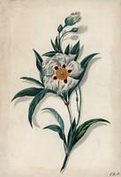 BOTANICAL - STILL LIFE FLOWERS / FLORAL STUDY Watercolour Painting c1850 SIGNED