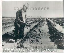 Cotton Farmer Jim Finley in His Field Lubbock Texas Press Photo