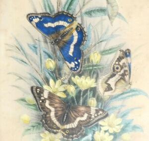 Gravure originale XIXe rehaussée Aquarelle Papillons et Chenilles Sous Cadre