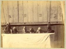 Photo Albuminé Animaux Le Repas des Singes Vers 1870