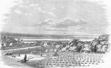 DURBAN. Cultivation of Arrow-Root, Port Natal. ground, antique print, 1858