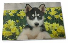 Siberian Husky by Daffodils Extra Large Toughened Glass Cutting, C, AD-H67DAGCBL