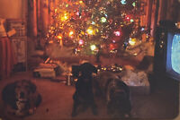 Vintage Photo Slide 1972 3 Dogs Posed Christmas Tree