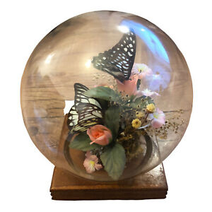 Vintage Butterfly Taxidermy Display Glass Dome Cloche Butterflies Curio