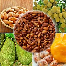 100% Natural High quality sun dried Jack fruit Seeds