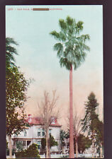 CALIFORNIA CA Fan Palm House Vintage Postcard