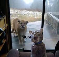 "Funny Mom  Cat  refrigerator magnet 3 1/2 x 3 1/2"""