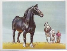 1962 PERCHERON HORSE Print Sam Savitt - BEST OFFER