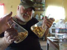 Monatomic Gold - Liquid ORMUS *  MANNA 250gms/ 8ozs