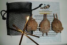 3 Live Fresh Chinese Praying Mantis Egg
