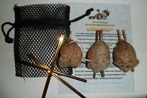 3  Fresh Picked Chinese Praying Mantis Egg   Free Hatching Habitat Bag.