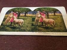 vintage stereoscopic slide . No 40 Jealous Pets