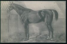 art Horse at animal stall original old 1900s postcard