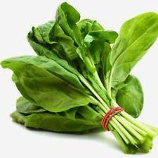 100PCs Spinach Seeds Rich Anthocyanin Fresh Green Vegetable DIY Home Gardening
