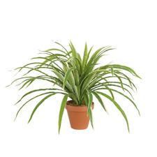 Artificial Silk Houseplant 'Potted' Spider Plant 45cm Pot Plant