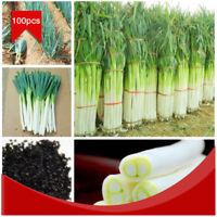 100 Stücke Lauch Grüne Zwiebel Zwiebeln Bonsai Pflanze Gemüse Samen Saatgut