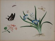 Two Original Antique China Trade Botanical Paintings-Flowers & Insects c.1800