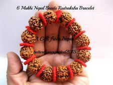 6 Mukhi Rudraksha / Six Face Rudraksh Bracelet ~18-20 MM ~ Nepal 12 Bead ~AA++