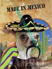 CHIHUAHUA LOVER'S BIRTHDAY GIFTS!     ADORABLE MEXICAN THEMED CHIHUAHUA SIGN.