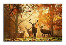 Large Wall Art Canvas Picture Print Autumn Leaves Deer Stag Framed