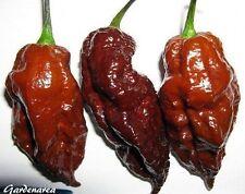 10+ Graines Chocolate Bhut Jolokia Ghost Pepper Fresh Seeds