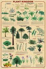 Plant Kingdom II Educational Science Teacher Classroom Chart Poster 24x36
