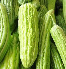 Gemüse Bitter Melon Mischung 10 Samen Orientalisch