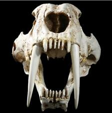 Resin 1:1 simulation Saber Tooth Tiger sabertooth skull Smilodon Fatalis Model