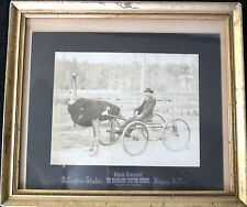 BLACK DIAMOND THE CELEBRATED TROTTING OSTRICH RACING PHOTO 1900'S