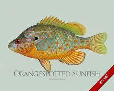 ORANGESPOTTED SUNFISH MOLA FISH PAINTING FISHING ART REAL CANVAS PRINT