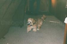 Dog Pants FOUND PHOTOGRAPH Color FREE SHIPPING Original Snapshot VINTAGE 712 10