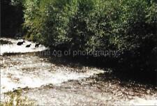 CANADIAN BEARS Canada ORIGINAL FOUND PHOTOGRAPH Color Snapshot VINTAGE 98 17 A