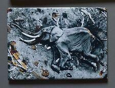 Peter Beard Fridge Photo Magnet 9x7cm Elephant Starvo National Park 1972 Elefant